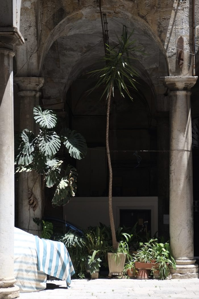 A palm.  A frame (Palermo, June 2017)
