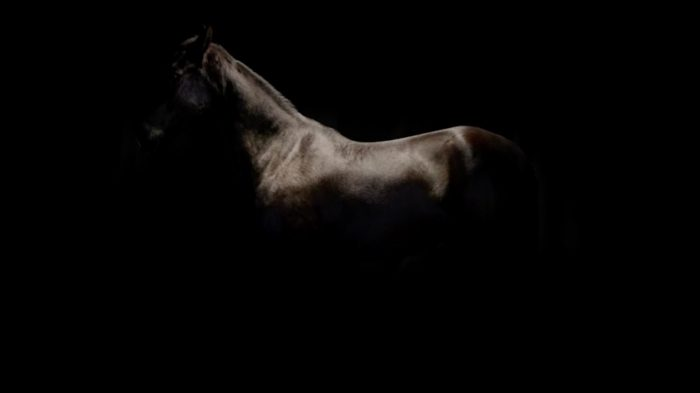Horse. Chiascuro.